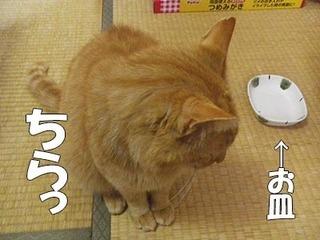 natsu201506111.jpg