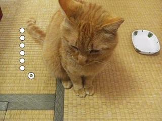 natsu201506114.jpg