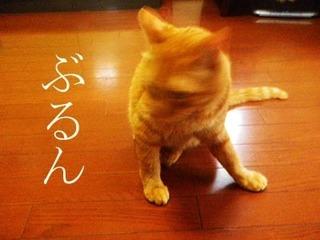 natsu201507212.jpg