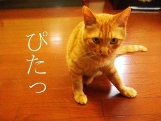 natsu201507213.jpg