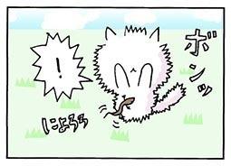 tokage3.jpg