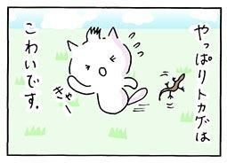 tokage4.jpg